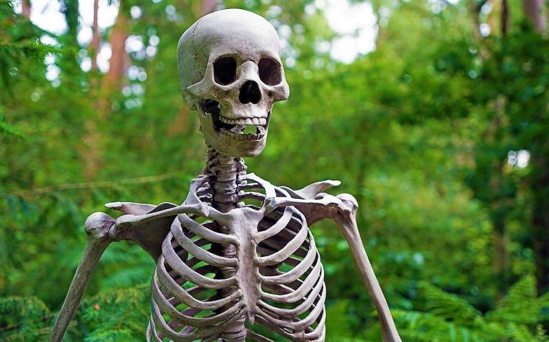 Sistema óseo | Qué es, función, huesos, información | Cuerpo humano
