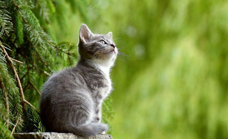 Alergia a los gatos Síntomas, acciones y remedios para curarla
