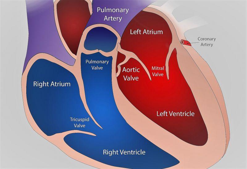 Anatomía Archivos - Viviendo Bien